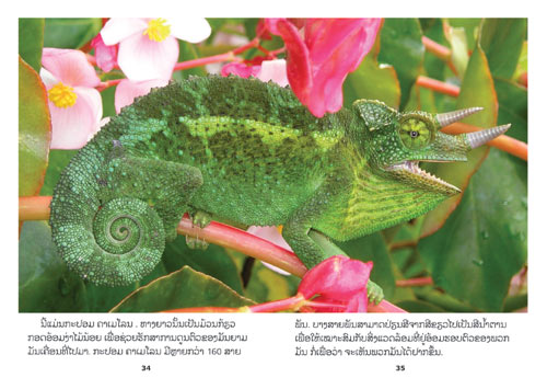Samples pages from our book: Reptiles